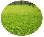 庭木のお手入れ・草刈り・剪定・木の伐採